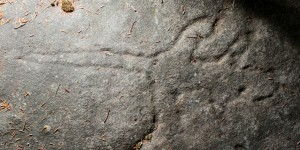 Mooney Mooney - an engraving of a lizard