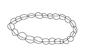 Wheeler Heights - an outline of an engraving of a cowrie shell chain
