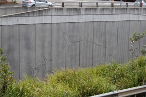 The Bluff Track - Warringah Freeway