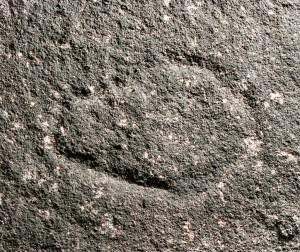 Warrah Trig Road - an engraving of a small mundoe